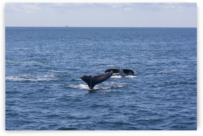 Whale Watching by Five14Photography