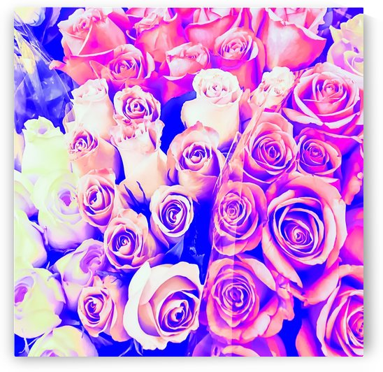 bouquet of roses texture pattern abstract in pink and purple by TimmyLA