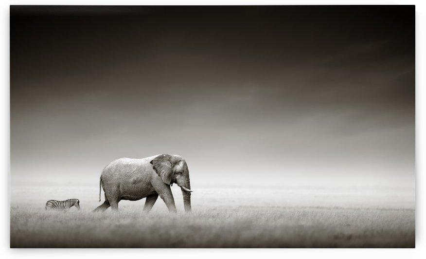 Elephant with zebra (Artistic processing) by Johan Swanepoel