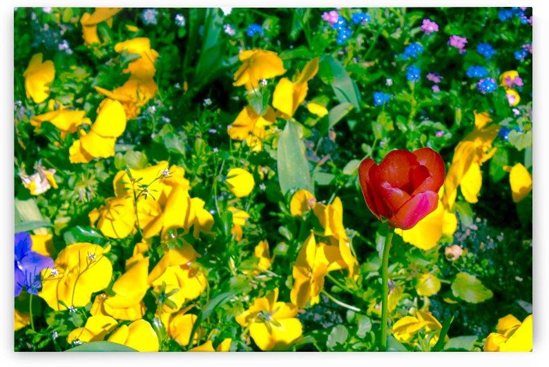 red flower  by Bentivoglio Photography