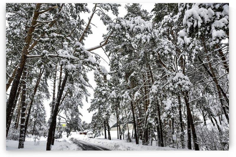 A Walk Between Trees by Ann Romanenko