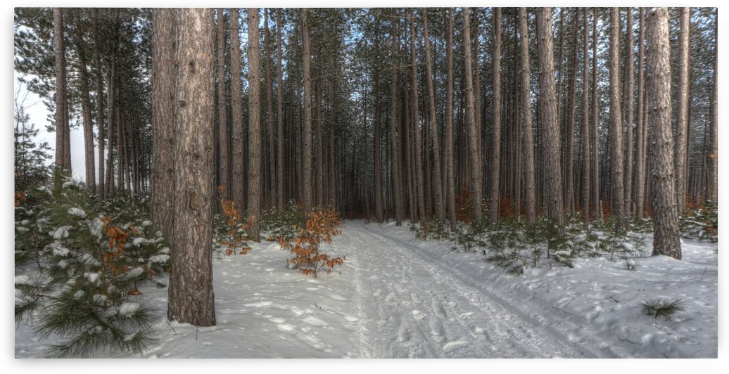 Snow Covered Trail by Paul Winterman