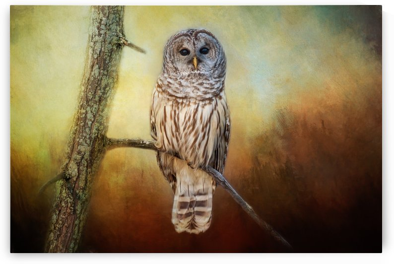 Barred Owl at sunrise with Textures by Michel Soucy