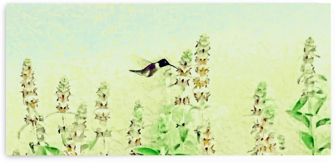 The Hummingbird by Cammie Rayas