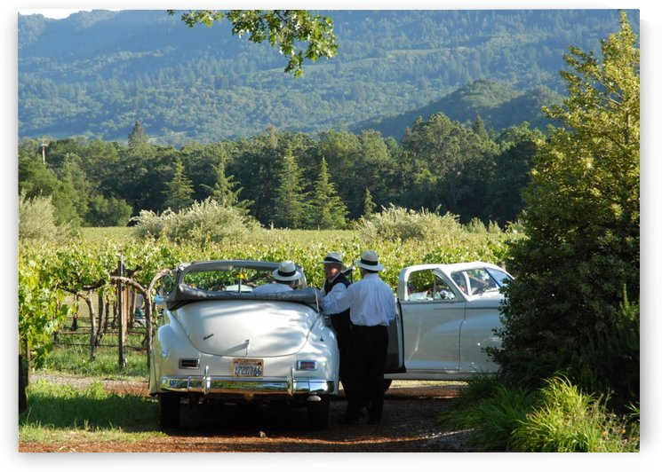 Packards In The Vineyard by Robin Buckley
