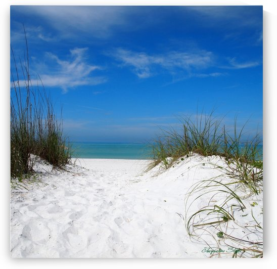 Coquina Dunes by Jacqueline Sleter