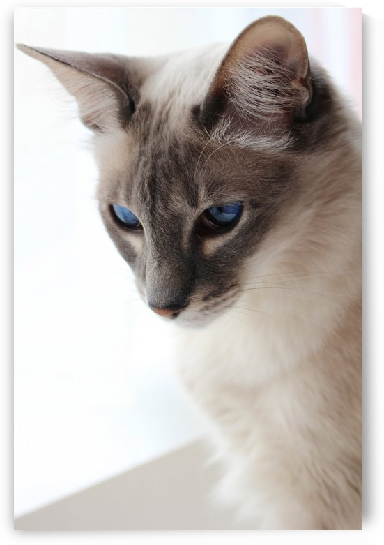 Blue eyes by Yuliya Marusina