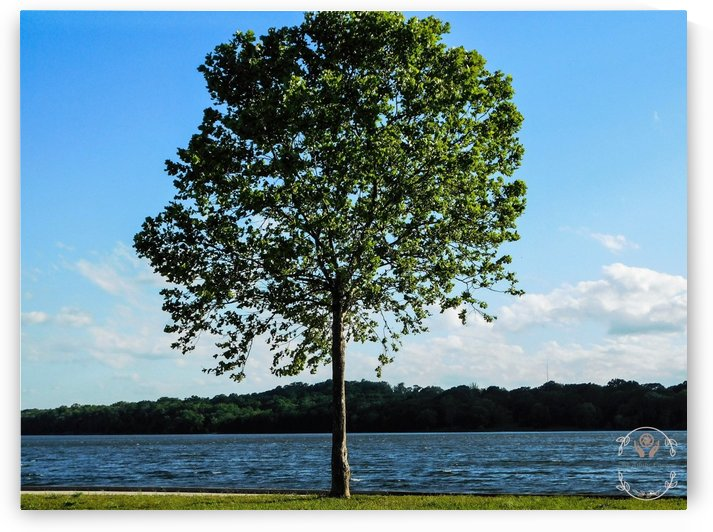 Lone Tree by Amber Handy