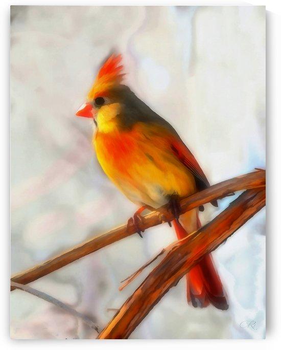 Cardinal by Richard D. Jungst