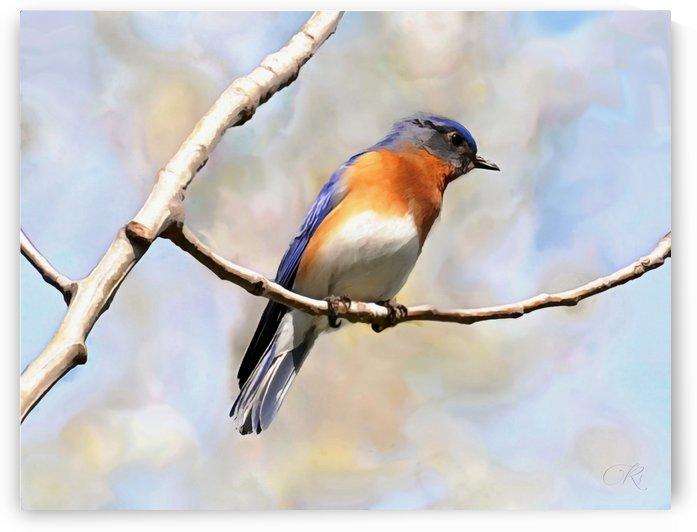Blue Bird by Richard D. Jungst