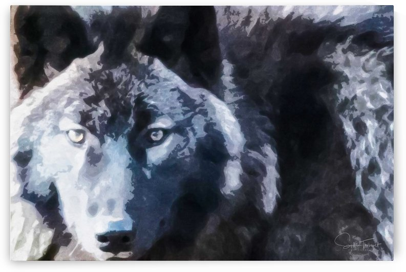 Loup noir by Sophie Thibault