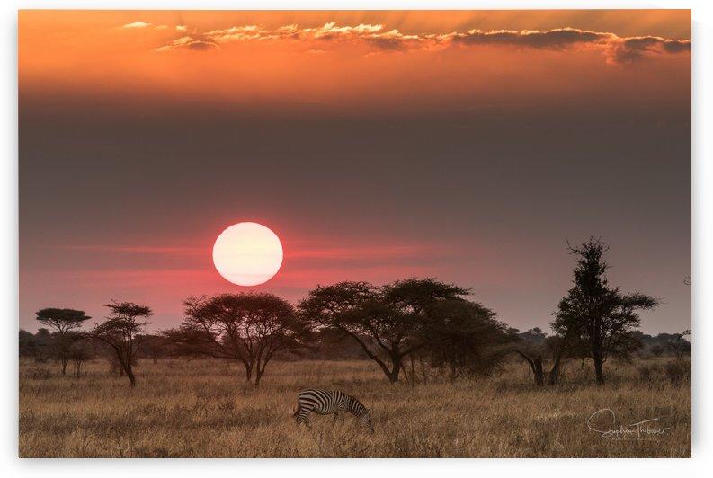 Soleil d Afrique by Sophie Thibault