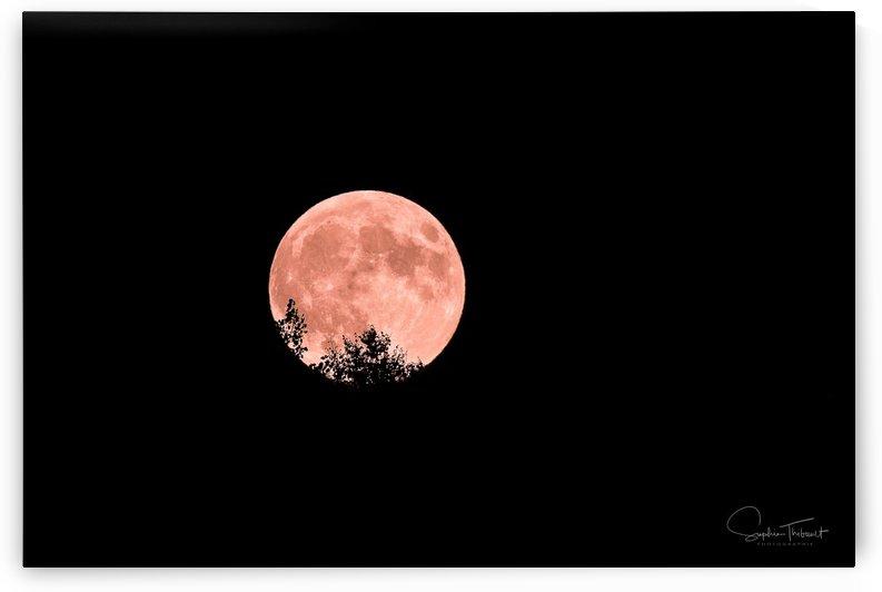 Lune branchée by Sophie Thibault
