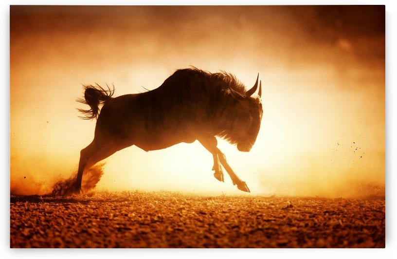 Blue wildebeest running in dust by Johan Swanepoel
