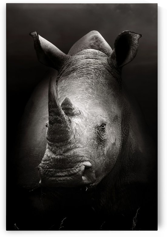 Rhinoceros portrait by Johan Swanepoel
