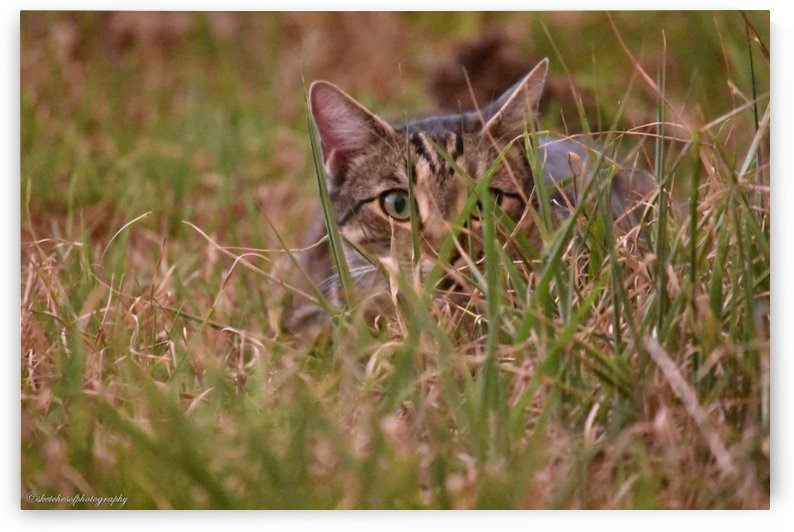 peek a boo by Eric and Pam Schmidt
