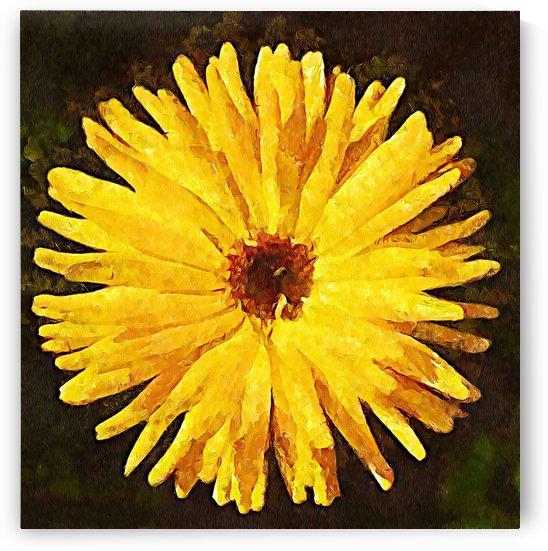 yellow burst by MIRIAM