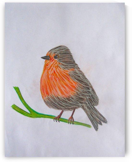 Robin by Sarah Flanagan