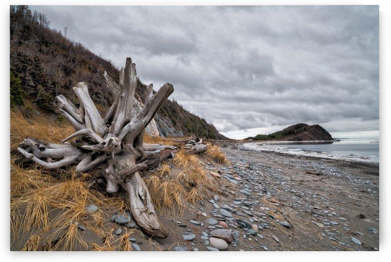 Deadwood at la Bloc by Michel Soucy
