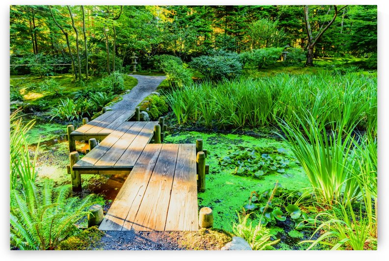 wooden bridge across a pond with duckweed and leaves of water lilies by Viktor Birkus