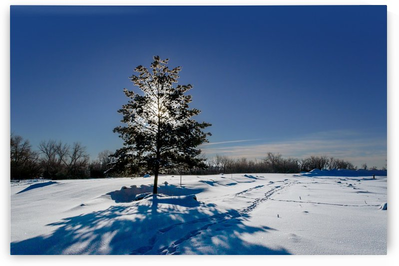 Frosty, snowy night with a purple sky,  Christmas tree at night by Viktor Birkus