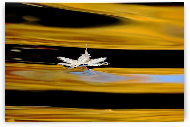 Black And Gold Autumn Abstract by Deb Oppermann