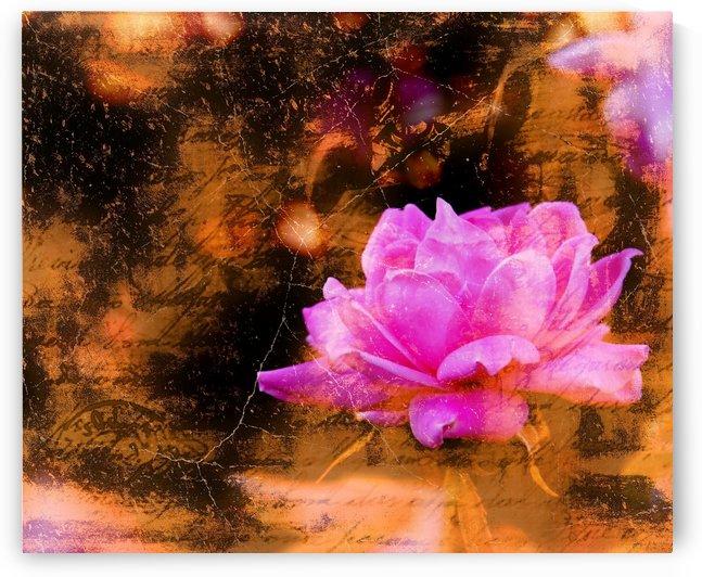Vintage Rose by Richard D. Jungst