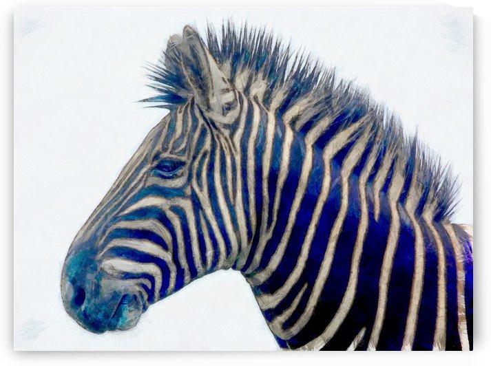 zebra  2450 by Richard D. Jungst