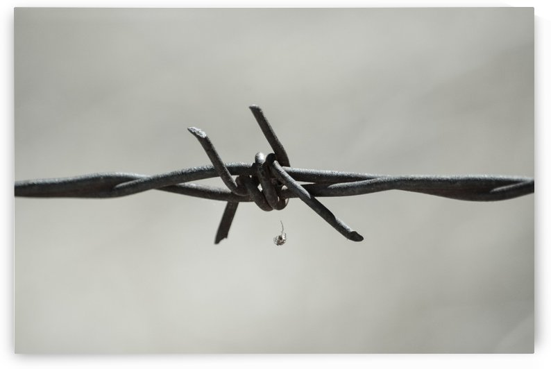 Spider On Barbed Wire In Black And White by Leah McPhail