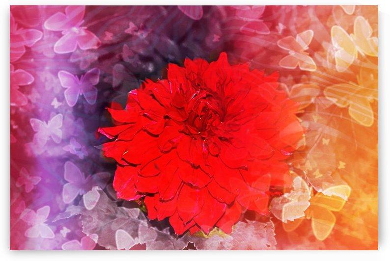 Butterfly flower by Nilu Mishra