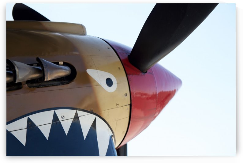 P-40 Warhawk Nose by Wallshazam