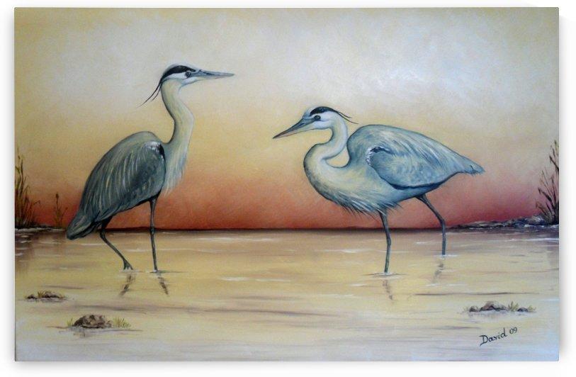 Blue Herons by David Drousiotis