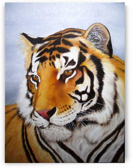 Bengal tiger  by David Drousiotis