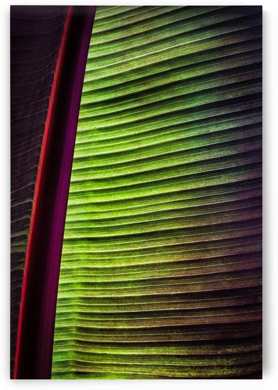 Vegetal sail  -  Voile vegetale by Carole Ledoux Photography