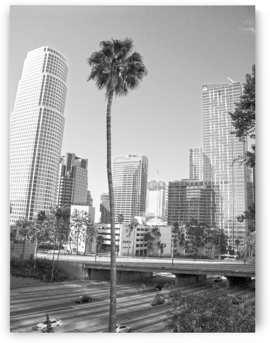 DTLA Palm Tree by Hold Still Photography