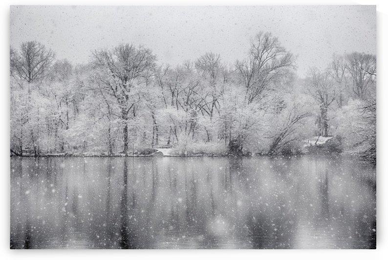 Snowy trees by Kaye