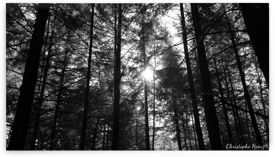 foret by Christophe Heinz Photographe