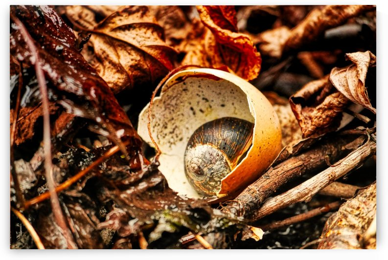 Shell in shell by Andy Jamieson