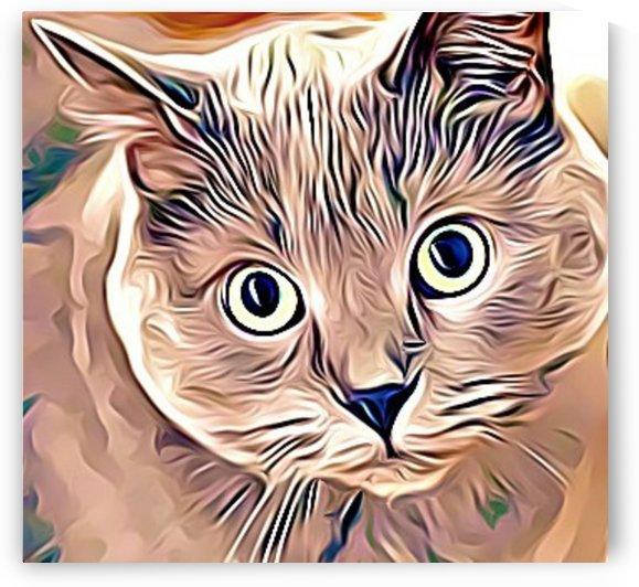 cat eyes by MIRIAM