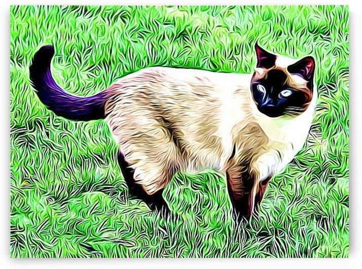 CAT3 by MIRIAM