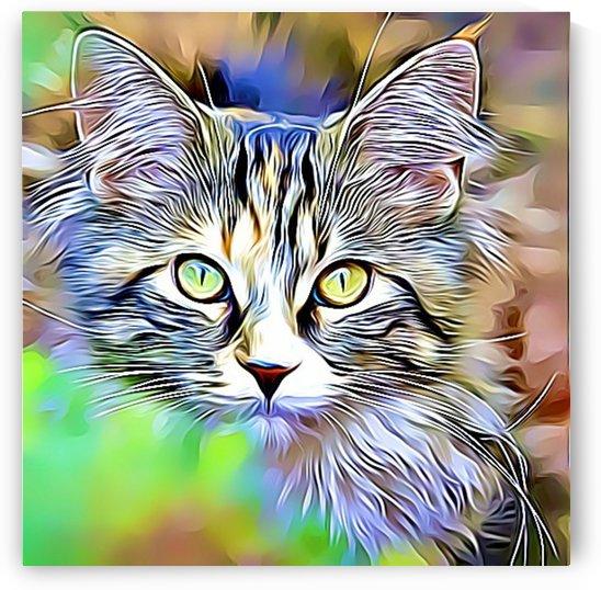 CAT6 by MIRIAM