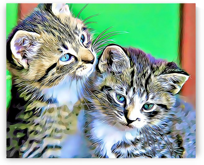 CAT7 by MIRIAM