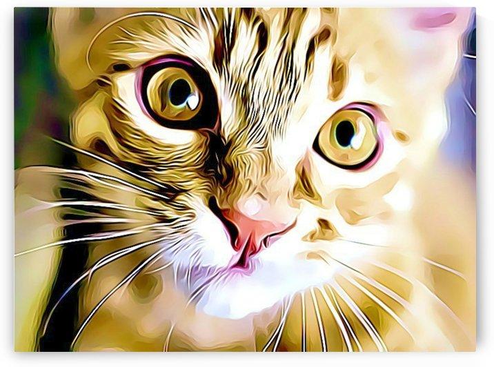 CAT8 by MIRIAM