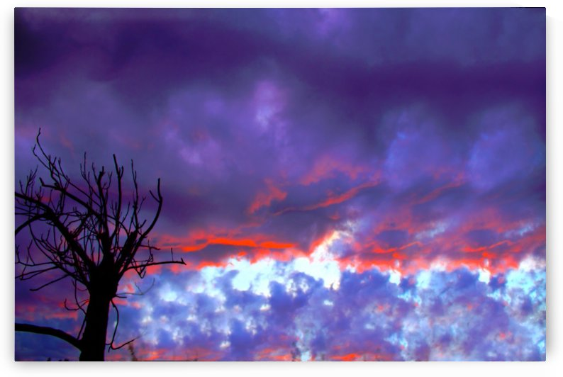 Violet Sunset by Rosalva Aguilar