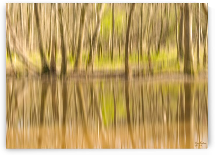 forest park reflections by crystalfind