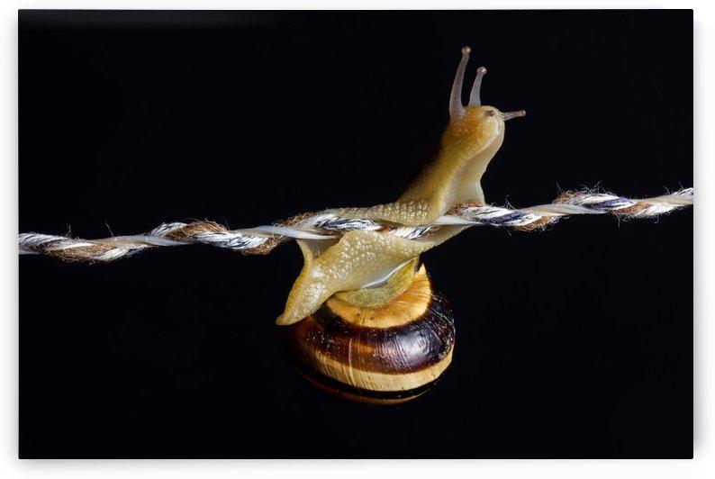 curious snail by Besa Art