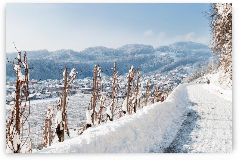vineyard in winter landscape by Besa Art