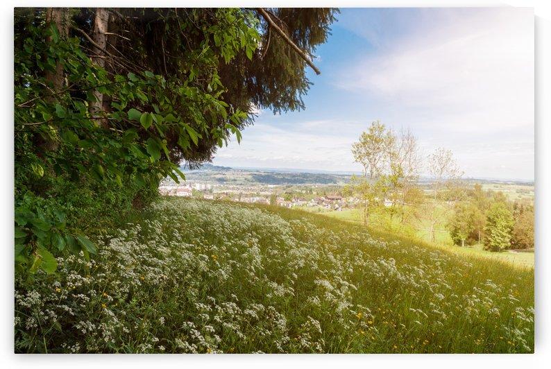 flower meadow by Besa Art