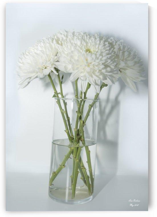 Mum Flower in a Vase by crystalfind