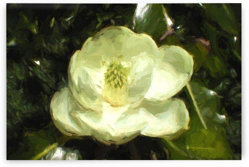 Magnolia by Jacqueline Sleter
